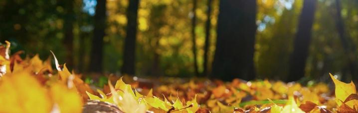 Herfstbenodigdheden