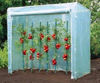 ACD Tomatenkas Large