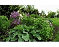 Tuinplantenmeststoffen