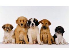 Voeding voor Puppy's