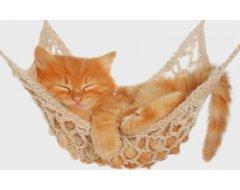 Kitten (tot 12 mnd)