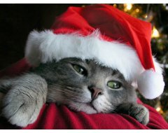 Kerst Special
