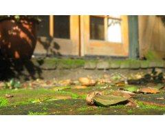 Mossen & Groene Aanslag