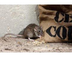 Specifiek voor Ratten